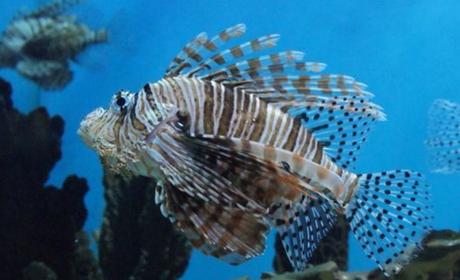壁纸 动物 海底 海底世界 海洋馆 水族馆 鱼 鱼类 460_280