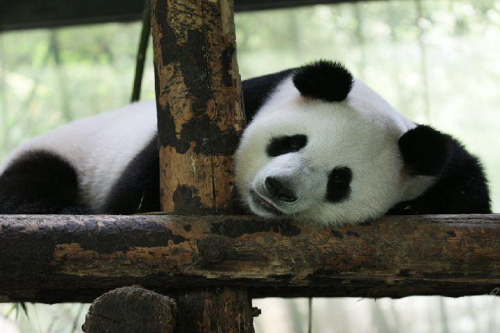 上海野生动物园景区—智能语音电子导游
