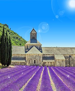 南法薰衣草季