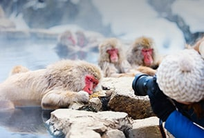日本雪猴溫泉