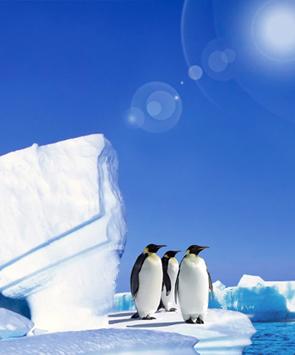奢华南极邮轮