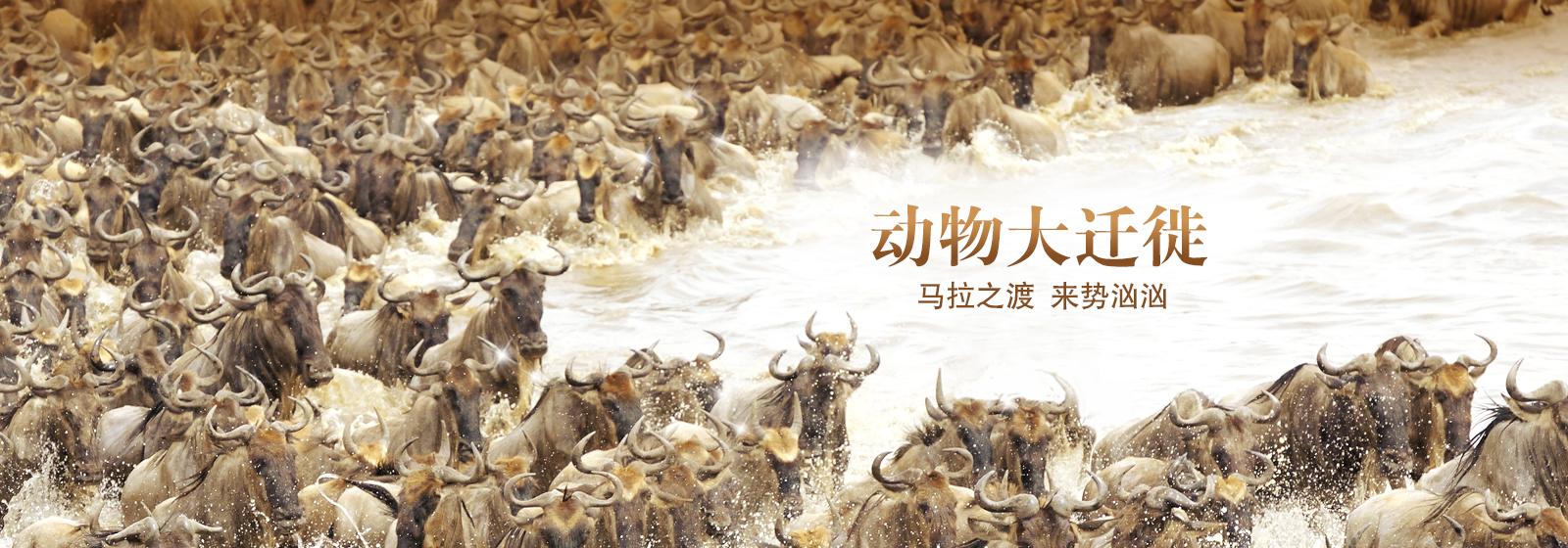 动物大迁徙-马拉之渡·来势汹汹