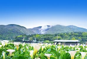 台湾赏花旅
