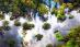 水天一色 雨林奇景
