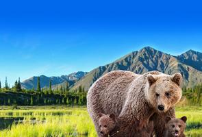 探访灰熊家园