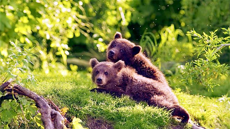 """追随英国BBC《地球脉动》团队,走进加拿大""""熊的家园"""""""