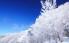 阿苏树冰景观