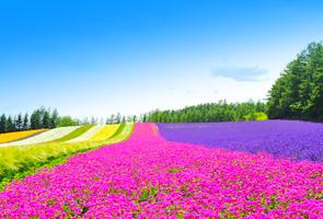 周游北海道