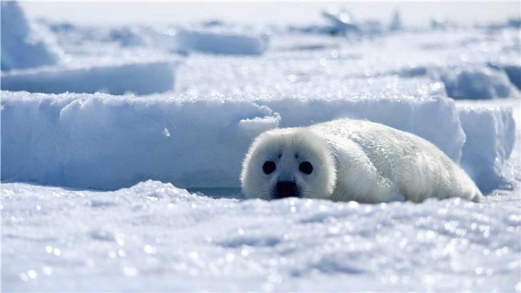 对世界充满好奇的小海豹