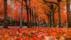 布满枫叶的浪漫街景