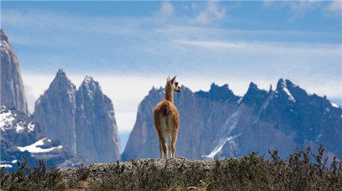 百内国家公园和lama