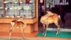 街头的小鹿