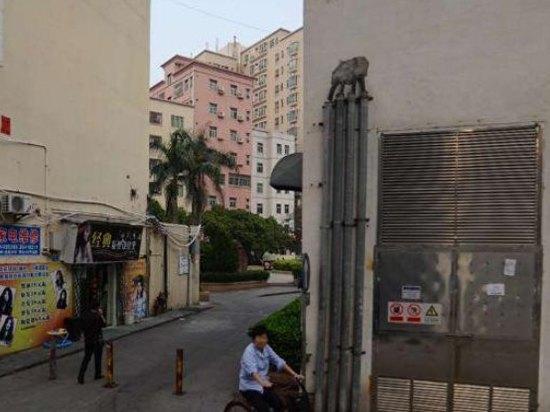 毗邻海岸城购物广场,是由枫叶投资有限公司投资管理图片
