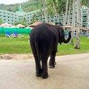 普吉島艾美海灘度假酒店(Le Meridien Phuket Beach Resort)