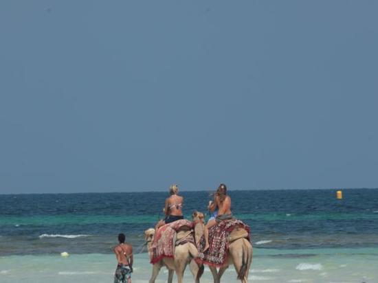 吉尔巴岛西贝尔莱姆海滩度假村(seabel rym beach djerba)