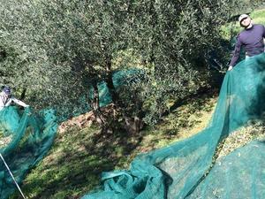 Agriturismo Terrarossa