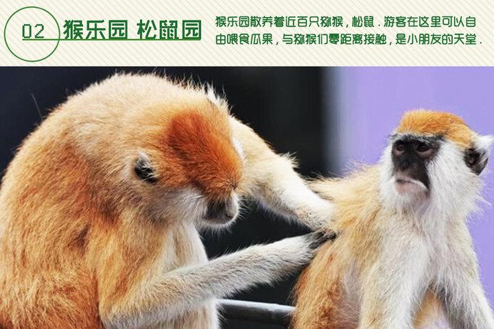 威海西霞口神雕山野生动物园成人票1张团购