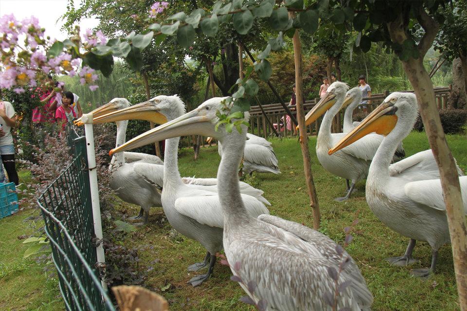 无锡国际饭店-高级间+动物园含太湖欢乐园