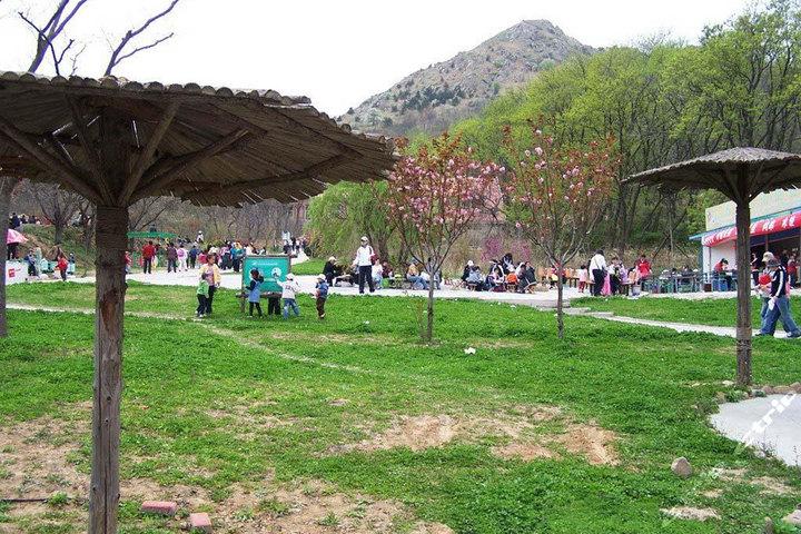 青岛森林野生动物园(成人票1张)