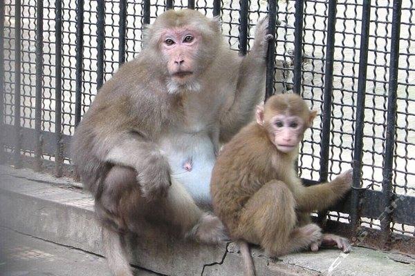 上方山森林动物园动物的图片展示