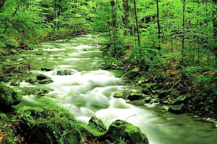 作为国家森林城市的延伸和珠三角国家森林城市群建设的重要抓手,惠