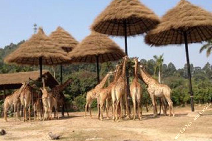 广州长隆野生动物园 欢乐世界3日团队游