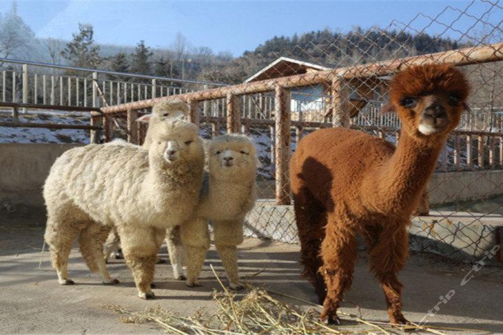 青藏高原野生动物园团购-原价30元-团购仅售25元