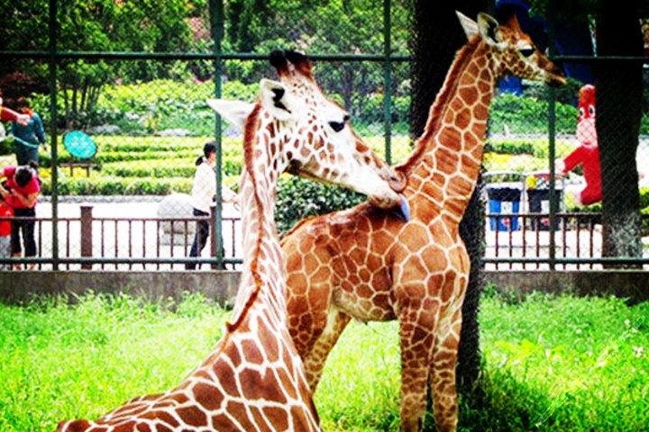 红山森林动物园团购-原价40元-团购仅售38元,南京景点