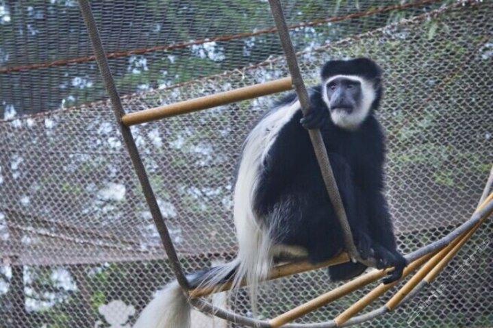 南京红山森林动物园成人票(不含企鹅馆)