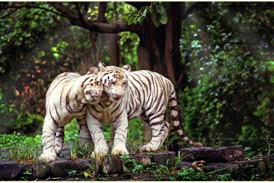 广州长隆野生动物园(儿童/长者门票1张)团购