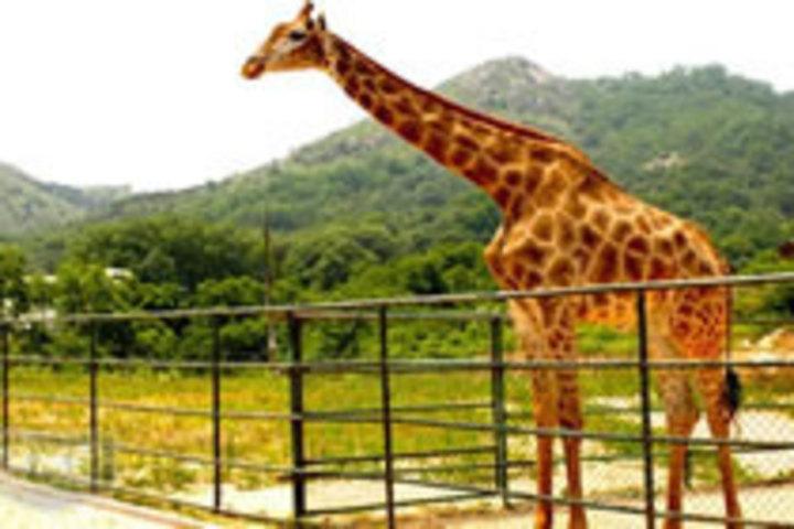 青岛森林野生动物园