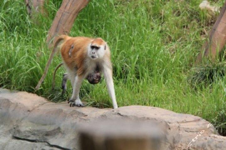杭州野生动物世界优待票