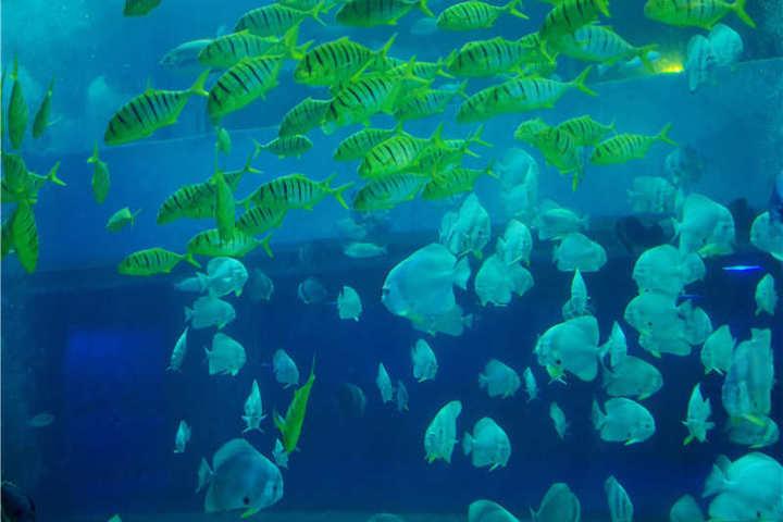 【行天下自组团】 一起神游海洋世界,出海拉蟹拢 浪漫图片