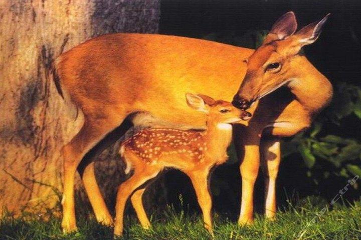 万安山野生动物园欢乐世界老人票