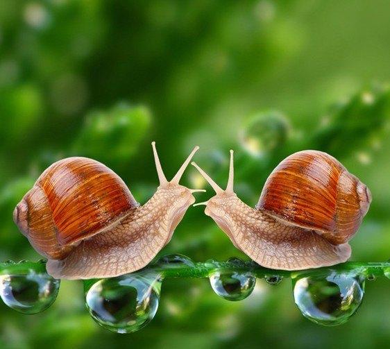 蜗牛动物微笑图