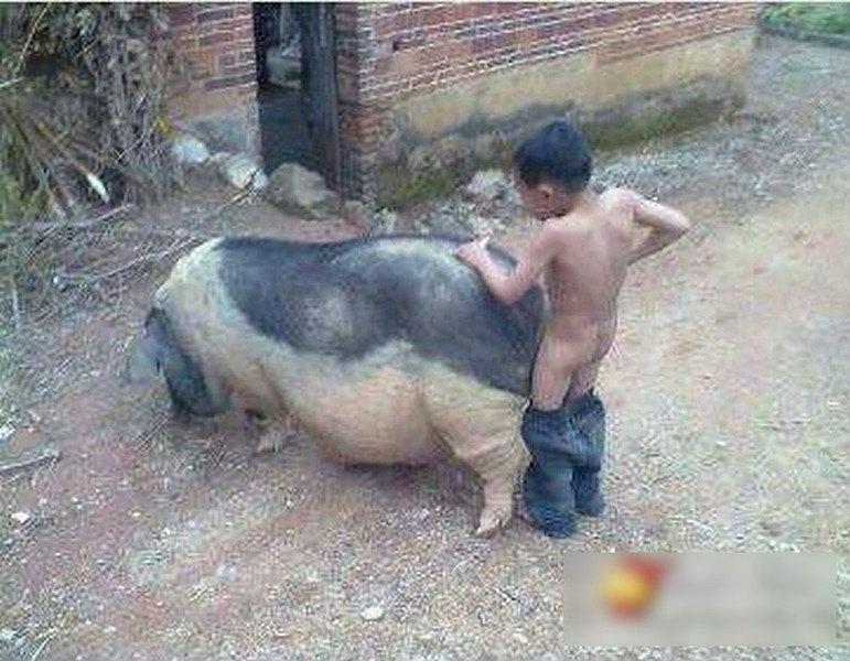 吃动物内脏好不好