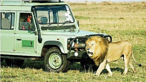 【动物大迁徙】肯尼亚多彩8天5晚·认养大象+肯尼亚