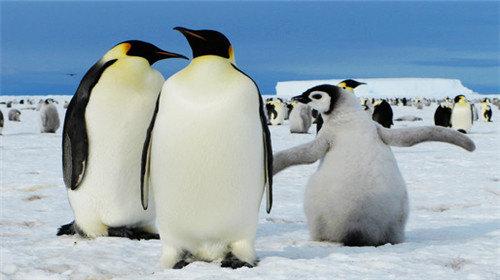 极地动物栖息地立体场景