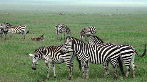 这里是非洲最集中的野生动物群落之一.