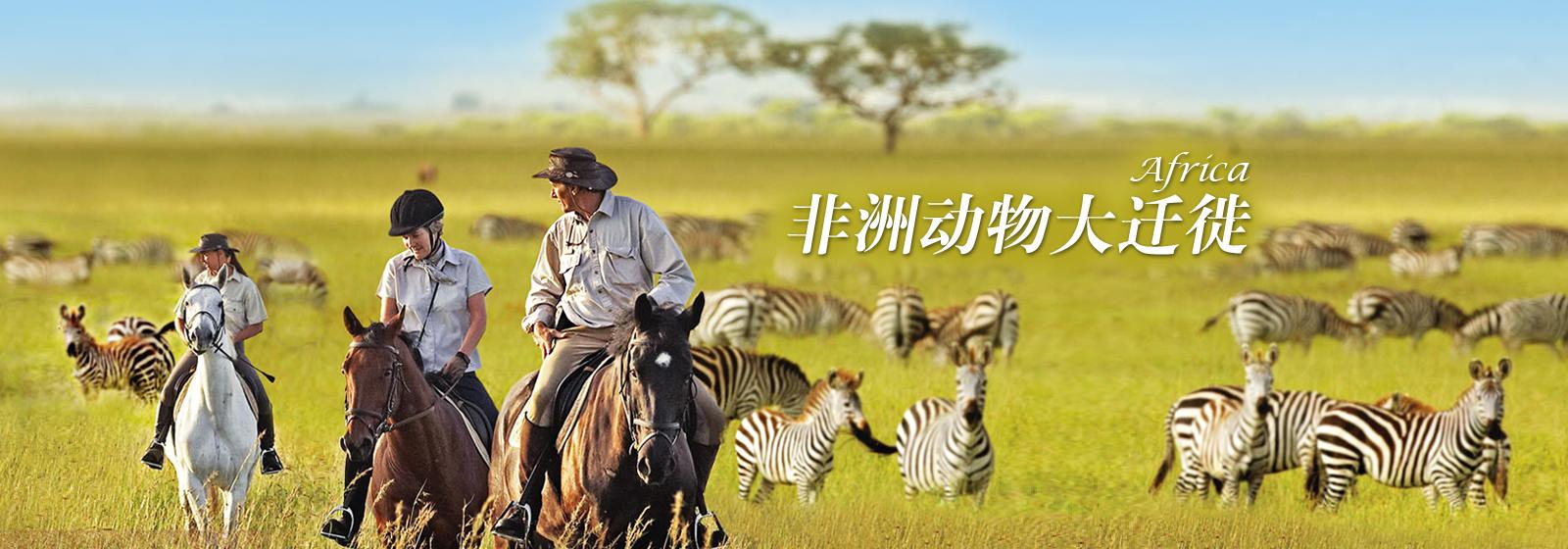 非洲动物大迁徙