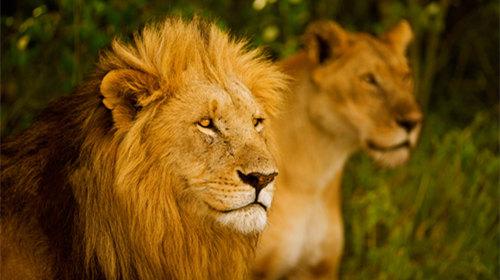 【生命赞歌】坦桑尼亚+肯尼亚探秘野生动物王国10天7晚·塞伦盖蒂国家