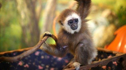 猴子抱动物图片