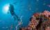 斯库巴潜水