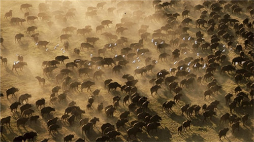 【动物大迁徙】肯尼亚经典探秘野生王国7天4晚