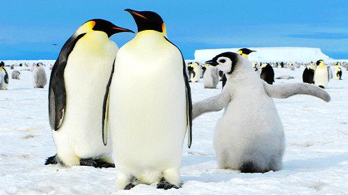 深入南极大陆·帝企鹅+俄罗斯科考站深度发现8天