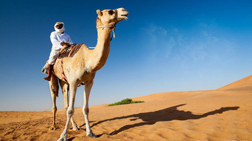 阿拉伯骆驼简笔画