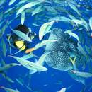 AJ Kouki Resort Hotel Okinawa (冲绳AJ幸喜度假酒店)