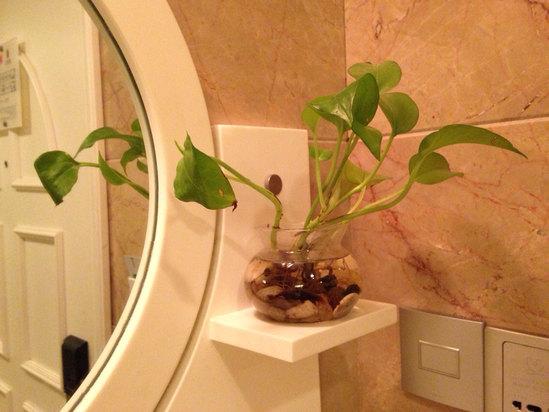 欧式房间盆栽图片