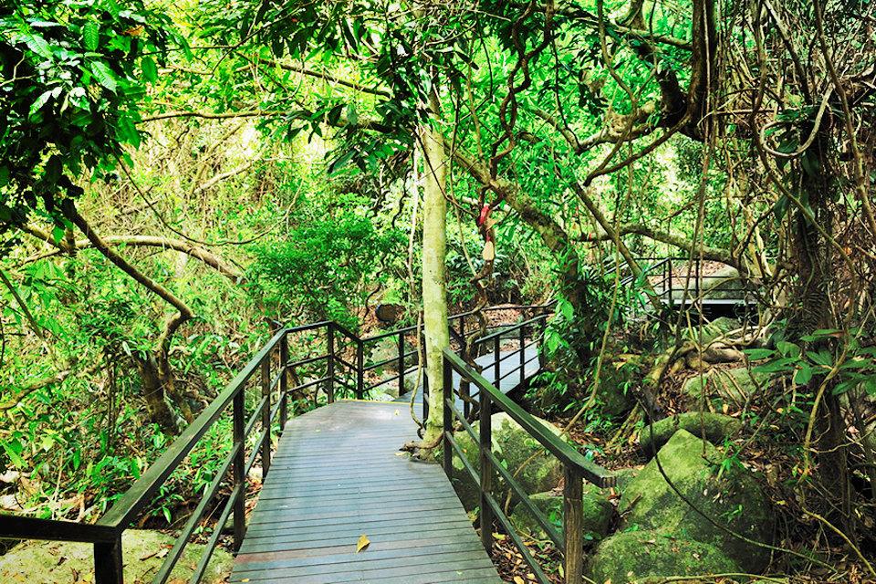 三亚呀诺达热带雨林 夜游三亚湾(1人次)