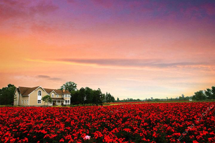国际玫瑰谷图片